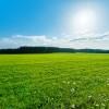 Łąka skąpana w promieniach słonecznych